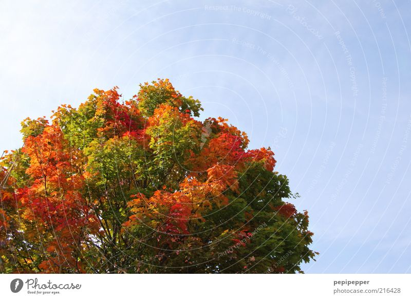 Nature Old Sky Tree Green Plant Red Vacation & Travel Far-off places Yellow Autumn Landscape Air Brown Weather Gold