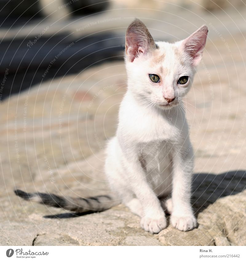 Sad kitten Animal Pet Cat 1 Baby animal Sit Small Cute Pink White Emotions Love of animals Sadness Concern Pain Grief Subdued colour Exterior shot Deserted