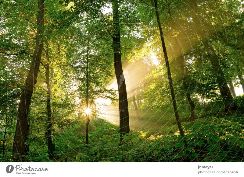 Nature Tree Plant Sun Vacation & Travel Leaf Forest Landscape Environment Lighting Fantastic Beautiful weather Optimism Sunrise Deciduous tree Sunset