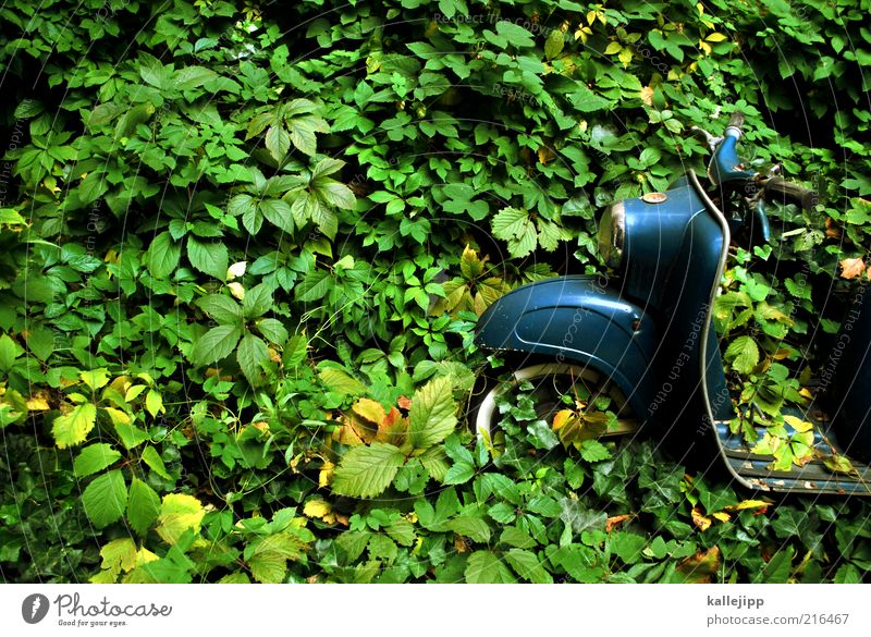 Nature Plant Leaf Forest Garden Time Wait Transport Growth Lifestyle Retro Romance Virgin forest Ecological Scooter Climate change