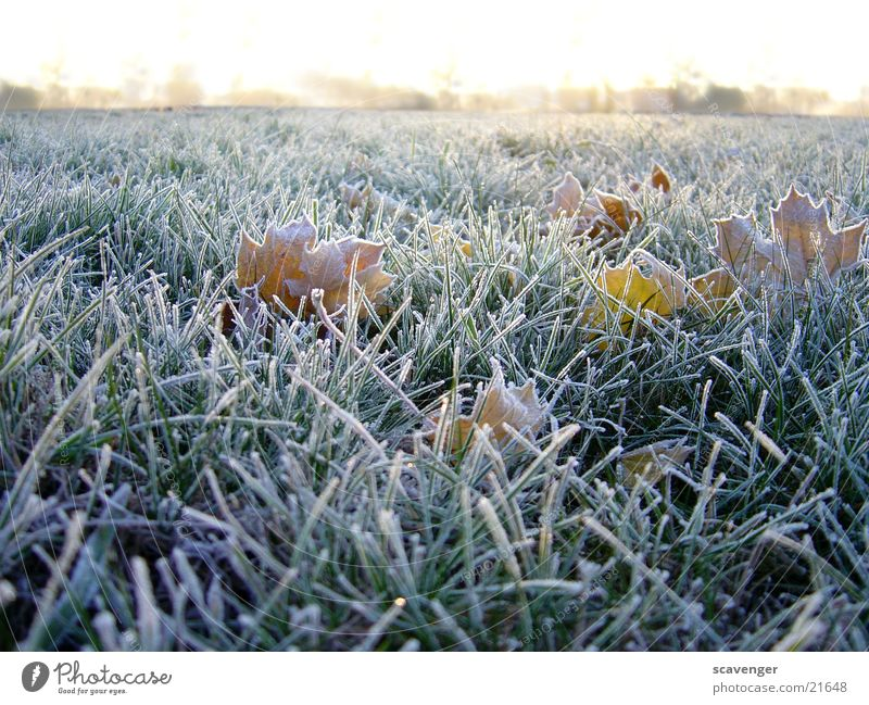 morning dew Winter Meadow Seasons Cold White Horizon Deserted Plant Grass Rope Hoar frost Landscape Snow Ice Sun Nature Exterior shot