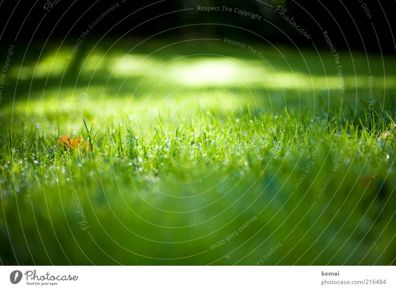 Autumn sun in the grass Environment Nature Landscape Plant Sunlight Climate Beautiful weather Grass Leaf Foliage plant Wild plant Fresh Glittering Bright Wet