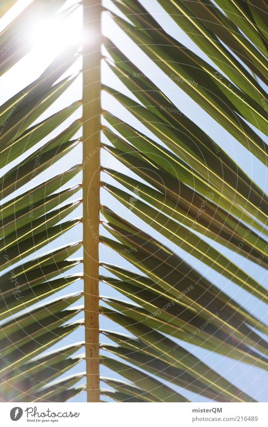 Far away. Environment Nature Weather Beautiful weather Esthetic Vacation & Travel Vacation mood Lesser Antilles Palm tree Palm frond Vacation photo