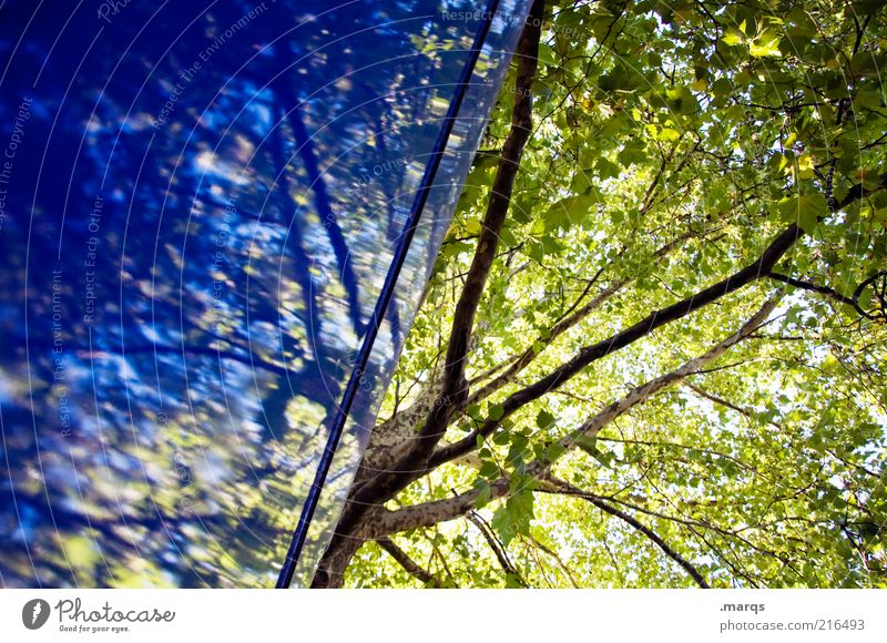 Nature Beautiful Tree Green Blue Plant Summer Autumn Wall (building) Emotions Wall (barrier) Hope Growth Branch Exceptional Sign
