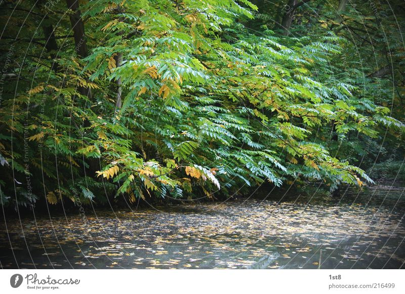Nature Water Tree Green Plant Leaf Yellow Forest Autumn Lake Landscape Environment Wet Esthetic Seasons Lakeside