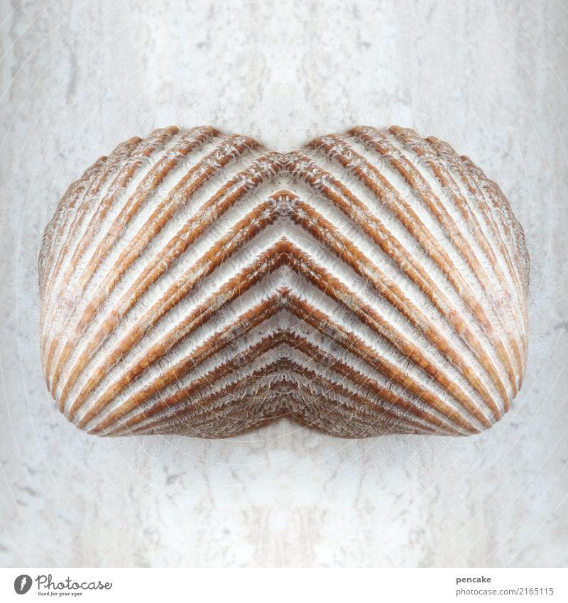 doppelgänger | feel me Mussel Esthetic Contentment Design Experience Contact Symmetry Dream Ocean Mussel shell Fusion Reflection Doppelganger Colour photo