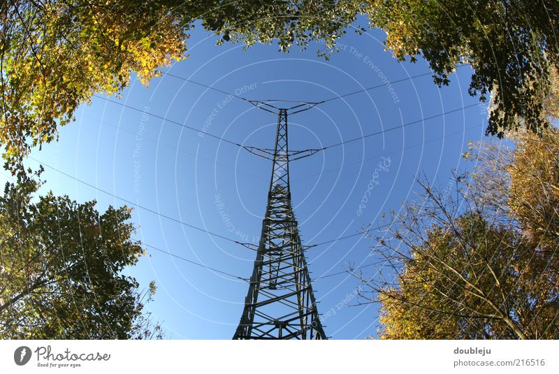 Nature Sky Autumn Energy Energy industry Electricity Electricity pylon High voltage power line Clearing Transfer Cloudless sky Danger High Voltage