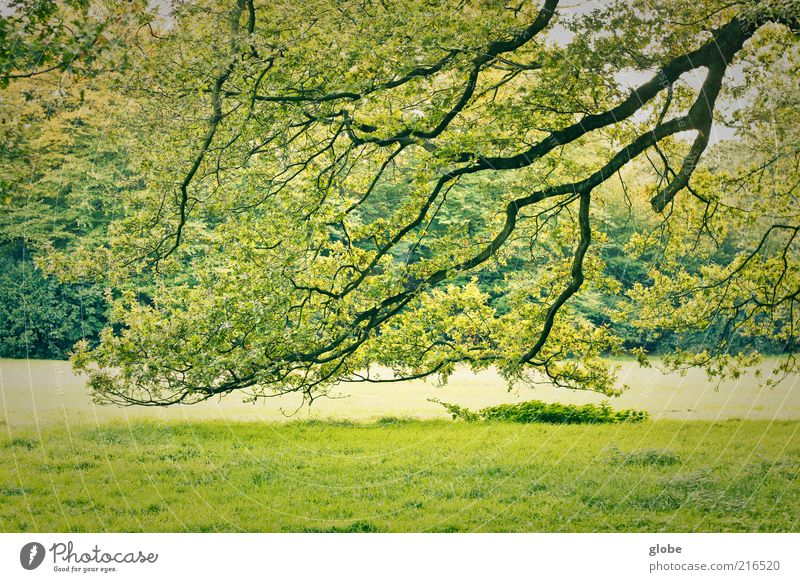Nature Green Tree Leaf Forest Meadow Park Esthetic Beautiful weather Branchage Foliage plant Twigs and branches Edge of the forest