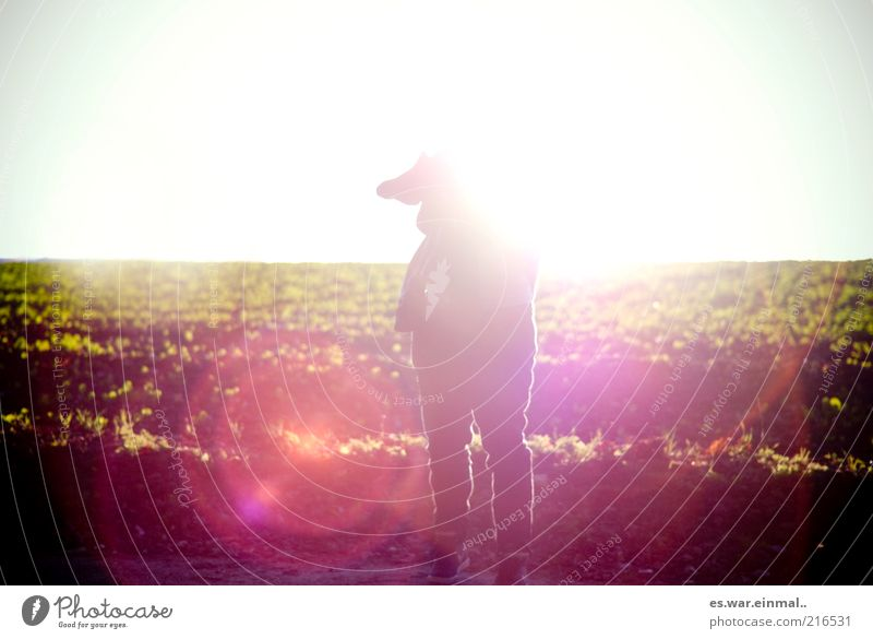 Human being Meadow Warmth Horizon Crazy Stand Illuminate Beautiful weather Anonymous Blue sky Headless Unidentified Androgynous Wayside Margin of a field