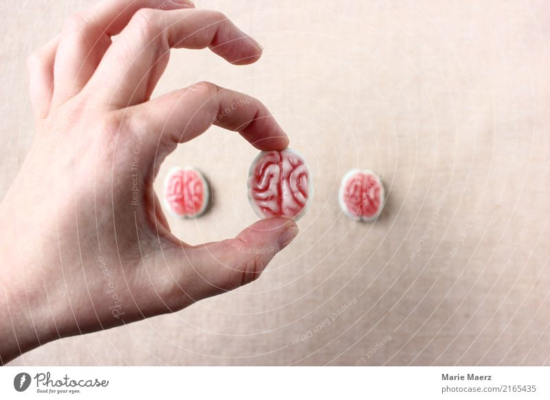 Brain picking. Hand with rubber brain Laboratory Brain and nervous system Select Think Study Exceptional Curiosity Responsibility Wisdom Experience Innovative