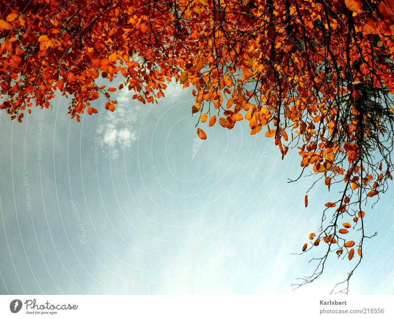 Sky Nature Tree Leaf Forest Environment Autumn Change Branch Beautiful weather Autumn leaves Harmonious Autumnal Branchage Autumnal colours Twigs and branches