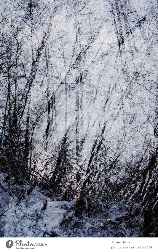 Sky Nature Plant Blue White Winter Forest Dark Black Environment Cold Natural Tree trunk Dusk Double exposure Bleak