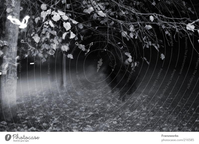 Human being Tree Leaf Dark Autumn Fear Fog Walking Creepy Ghosts & Spectres  Fear of death Magic Horror Eerie Hallowe'en Autumn leaves
