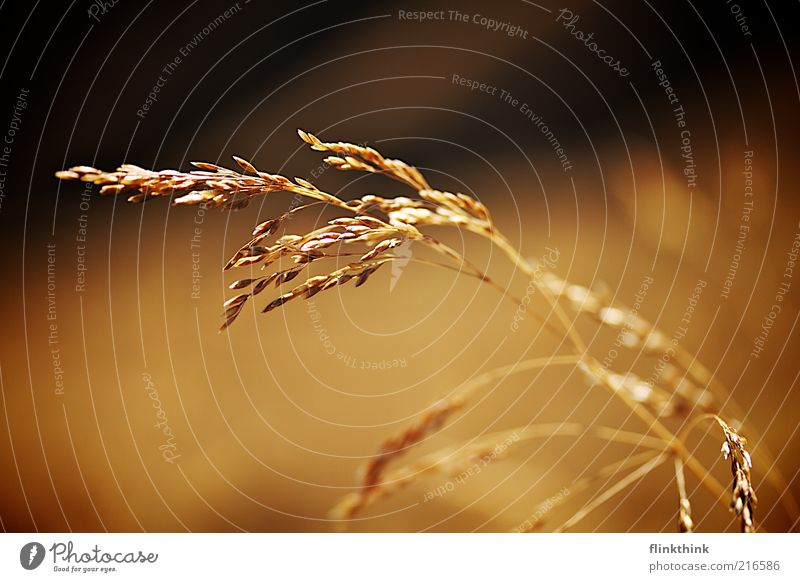 Plant Meadow Grass Landscape Brown Environment Gold Esthetic Growth Harvest Blade of grass Sustainability Shadow Foliage plant Income Grain