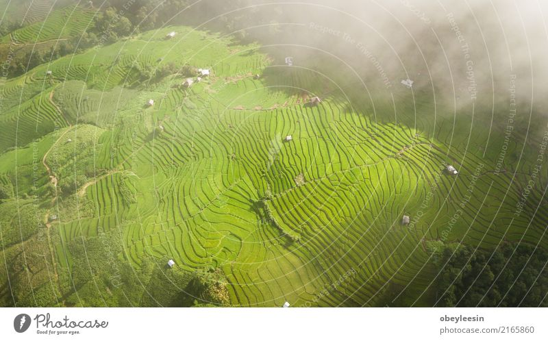 Top view of the rice paddy fields in northern Thailand Grain Calm Vacation & Travel Tourism Trip Summer Mountain Environment Nature Landscape Plant