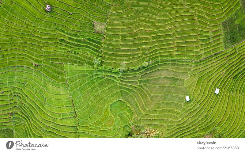 Top view of the rice paddy fields in northern Thailand Nature Vacation & Travel Plant Summer Landscape Calm Mountain Environment Meadow Natural Grass Building