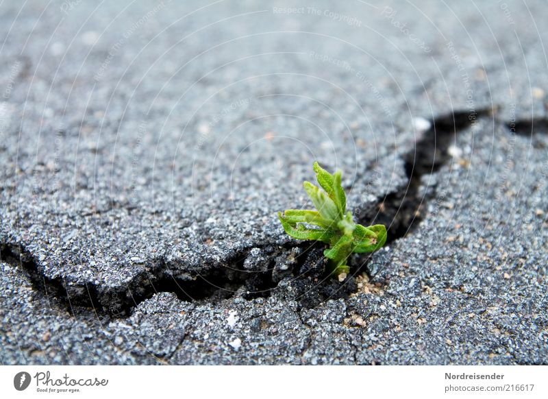 Nature Plant Environment Life Street Lanes & trails Spring Natural Earth Power Transport Success Growth Broken Hope Asphalt