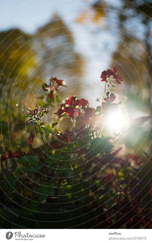 [ZICKENKRIEG] It's almost a dewdrop macro. Environment Nature Plant Sun Sunrise Sunset Sunlight Autumn Beautiful weather Tree Flower Grass Bushes Romance Kitsch