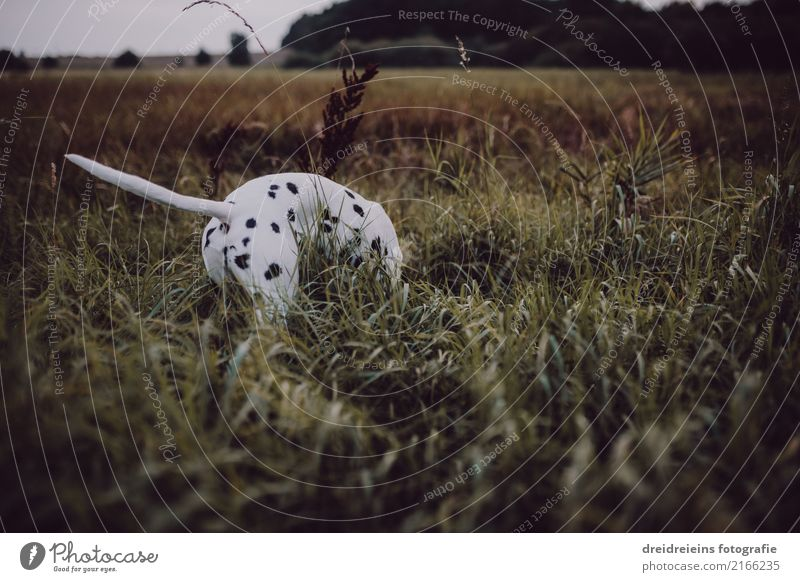 Adventure of a Dalmatian Environment Nature Landscape Meadow Animal Pet Dog 1 Curiosity Interest Life Joie de vivre (Vitality) Search Find Odor Discover