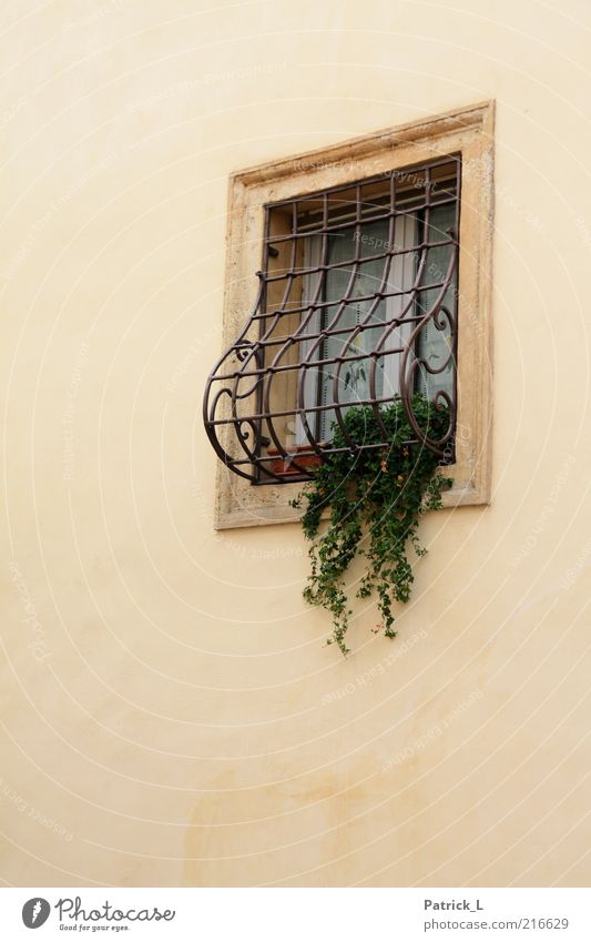 Beautiful Green Plant Yellow Wall (building) Window Wall (barrier) Bright Architecture Facade Romance Italy Curtain Grating Building