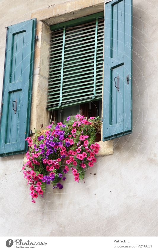 Beautiful Flower Blue Colour Window Wood Concrete Open Romance Violet Italy Living or residing Well-being Infatuation Mediterranean Shutter