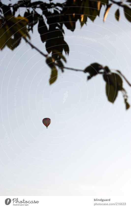 fly away Flying Expedition Sky Cloudless sky Tree Leaf Means of transport Hot Air Balloon Blue Black Discover Freedom Leisure and hobbies Joy Colour photo