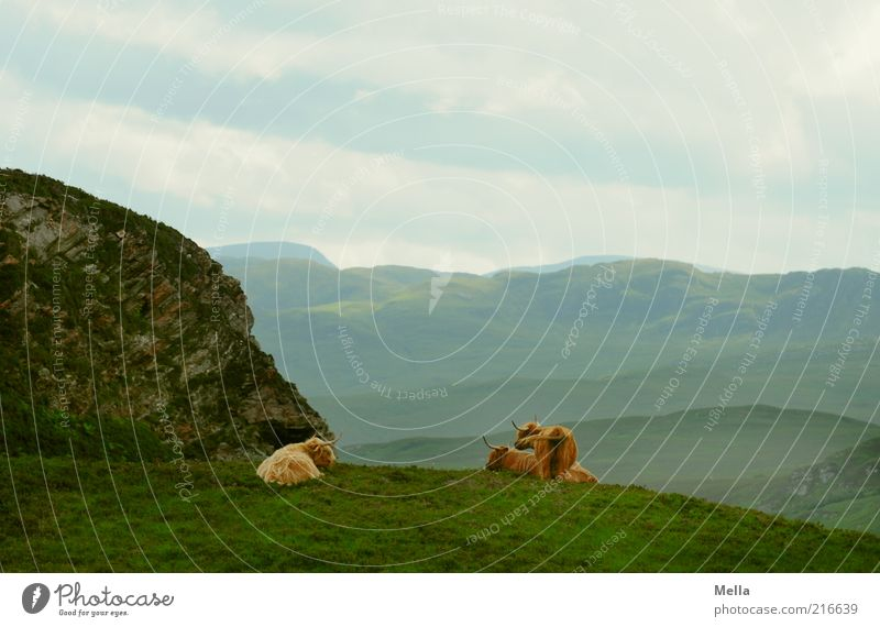 rest Environment Nature Landscape Earth Sky Meadow Hill Rock Mountain Scotland Animal Farm animal Cow Galloways 3 Lie Stand Together Break Calm Far-off places