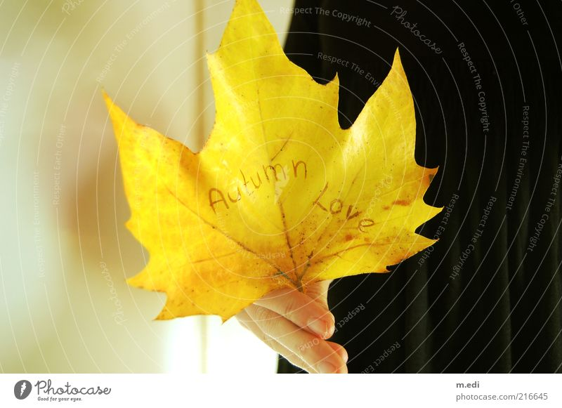 Hand Plant Leaf Yellow Autumn Fingers Characters Stand Autumn leaves Autumnal Maple tree Autumnal colours Display of affection Remark With love