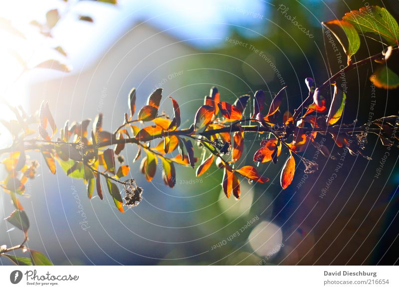 Nature Plant Colour Leaf Autumn Brown Orange Weather Beautiful weather Branch Twig Autumn leaves Section of image Partially visible Autumnal Autumnal colours
