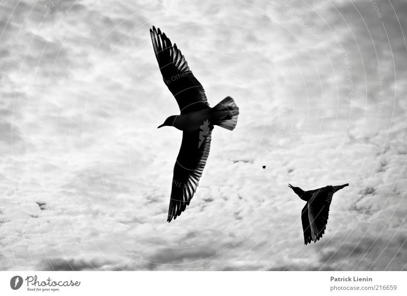 Nature Beautiful Sky Clouds Animal Landscape Air Moody Bird Coast Wind Weather Environment Flying Feather Wing