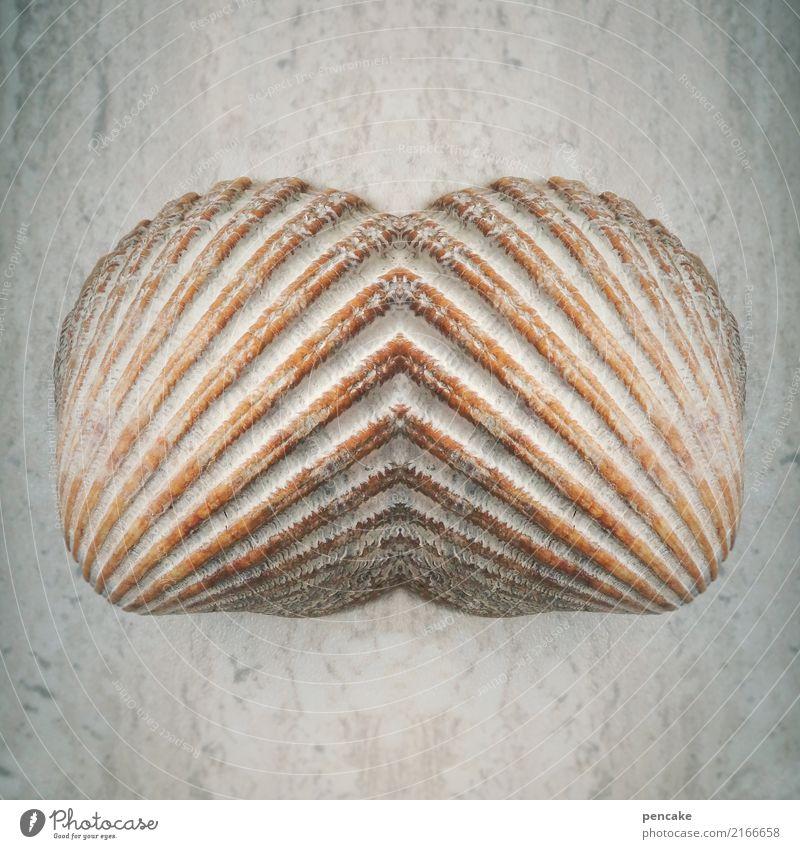 doppelgänger | touch me Mussel Ornament Esthetic Relationship Design Surrealism Symmetry Fusion Retro Colours Mirror image Colour photo Subdued colour