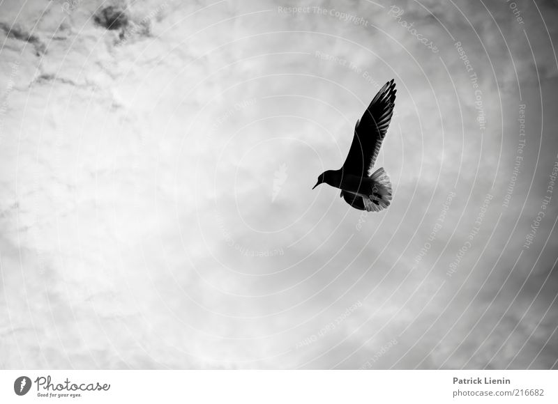 learning to fly Environment Nature Animal Sky Clouds Weather Wild animal Bird Wing 1 Flying Esthetic Simple Free Beautiful Natural Moody Seagull Hover