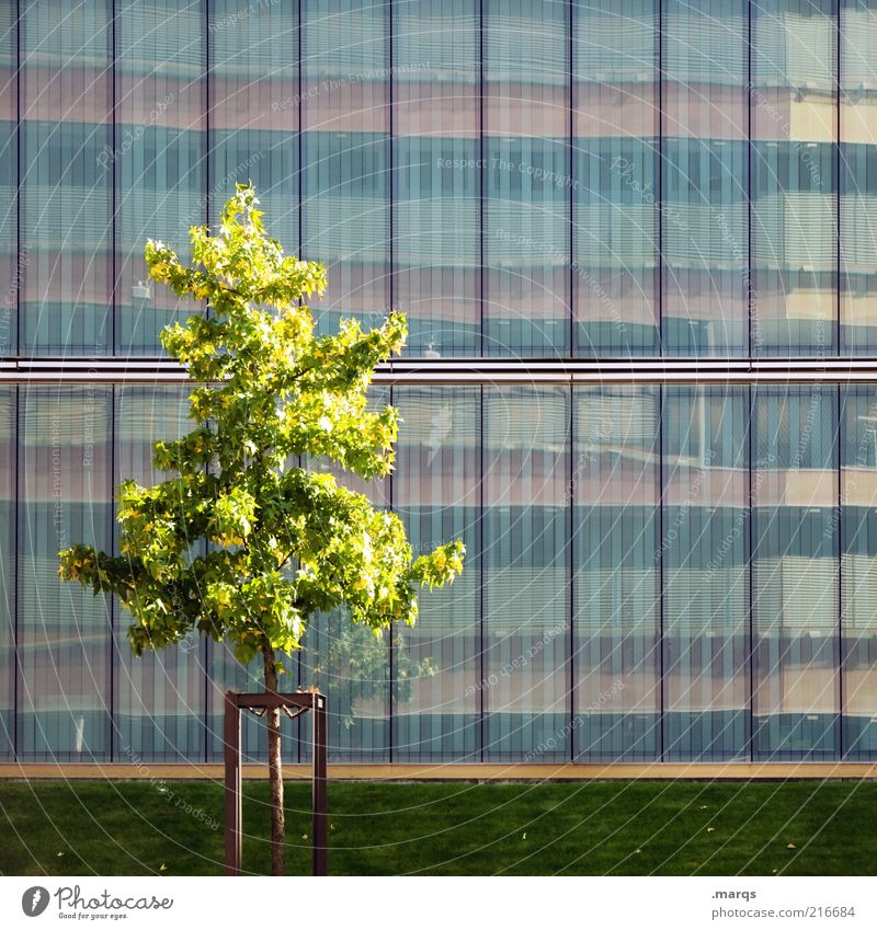 Nature Beautiful City Tree Summer Emotions Facade Growth Individual Converse Difference Mirror image Glas facade