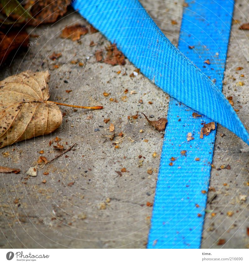 [HH10.1] - Autumn crumbs Blue Light blue lashing strap Remote Leaf Dried Shriveled Concrete Lie Exterior shot Crumbs Deserted Textiles Consecutively tight