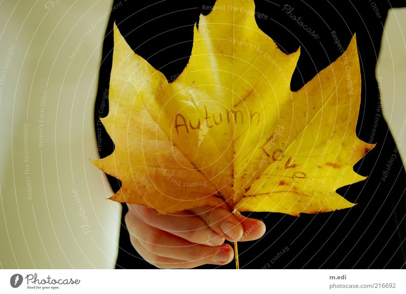 Old Hand Leaf Autumn Characters Dress To hold on Autumn leaves Human being Word Text Autumnal Give Section of image Maple leaf Partially visible