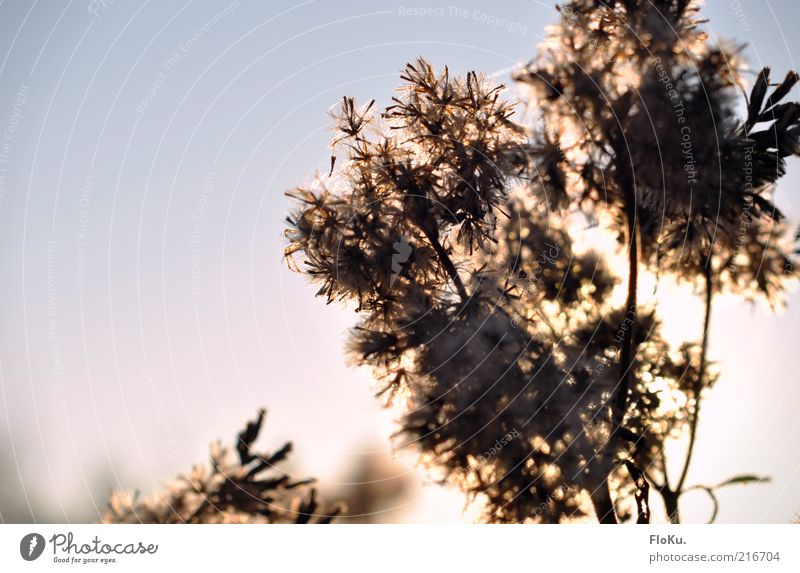 Nature White Blue Plant Leaf Black Autumn Blossom Grass Moody Bright Pink Environment Illuminate Beautiful weather Silhouette