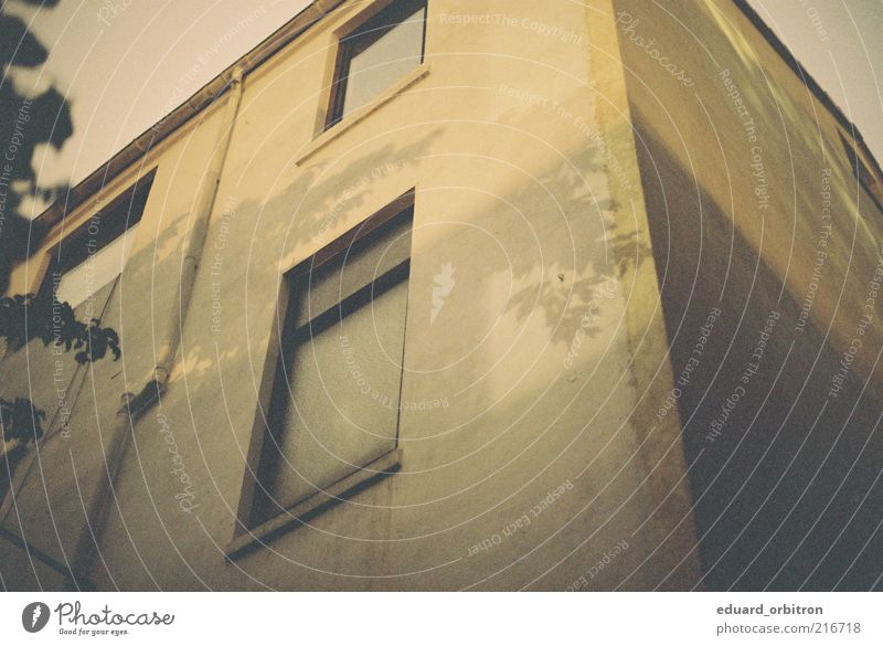 Old Tree Leaf House (Residential Structure) Wall (building) Window Wall (barrier) Facade Retro Partially visible Section of image Sharp-edged Shade of a tree Apartment Building