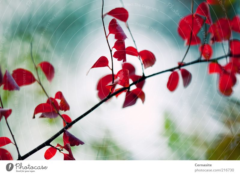 Autumn Leaves II Nature Blue Green Beautiful Tree Red Plant Leaf Far-off places Environment Landscape Dark Emotions Moody Exceptional