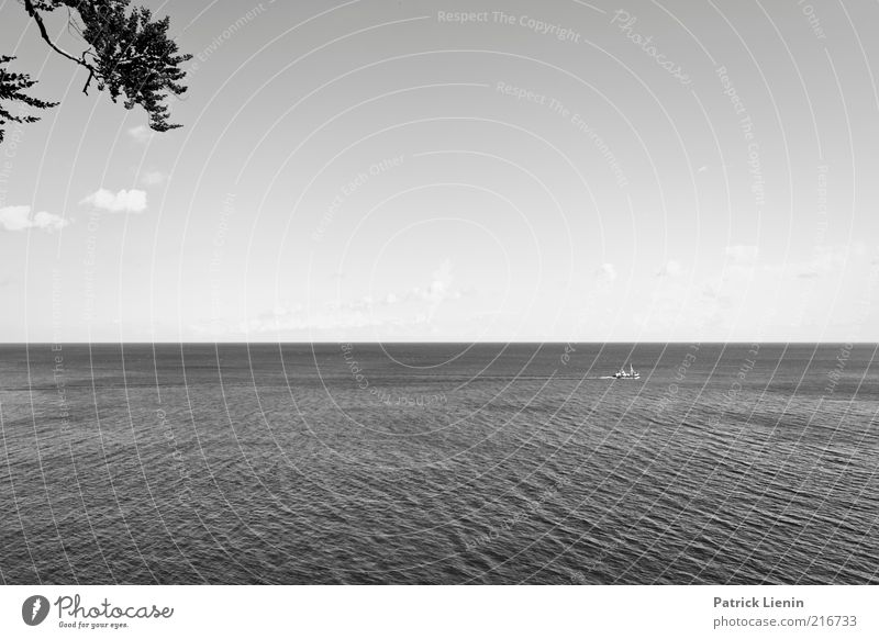 the lost ship and the tree branch Environment Nature Landscape Plant Elements Air Water Sky Climate Weather Beautiful weather Tree Waves Coast Bay Baltic Sea