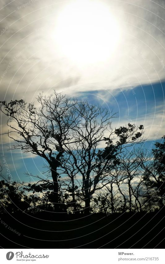Nature Sky White Tree Sun Blue Winter Black Autumn Wood Landscape Round Bushes Branch Hot Creepy