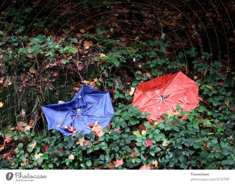 Nature Blue Red Plant Leaf Colour Autumn In pairs Broken Trash Umbrella Autumn leaves Defective Shackled