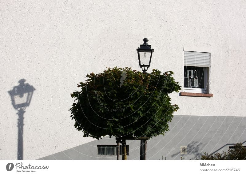 fake Tree House (Residential Structure) Facade Calm Shadow Lantern Treetop White Window Wall (barrier) Colour photo Exterior shot Copy Space top Day Shadow play