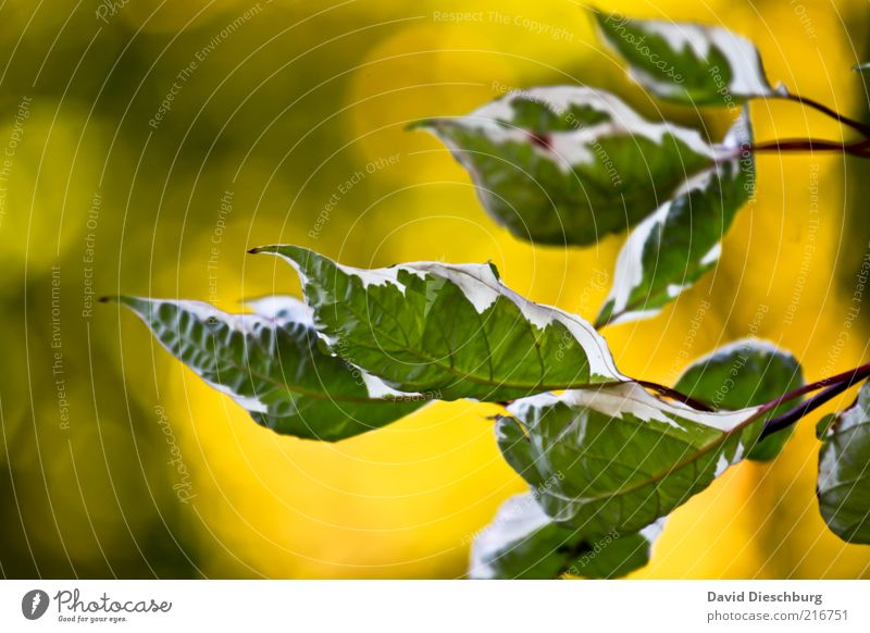 autumn wind Nature Plant Autumn Bushes Leaf Foliage plant Yellow Green White Leaf green Underside of a leaf Autumnal Early fall Warmth Rachis Wood grain