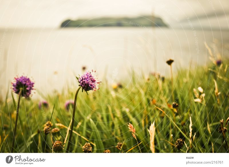 Nature Flower Ocean Plant Meadow Blossom Grass Landscape Coast Weather Environment Island Climate Hill Blossoming Living thing
