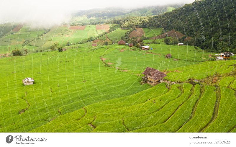 Top view of the rice paddy fields in northern Thailand Calm Vacation & Travel Tourism Trip Summer Mountain Environment Nature Landscape Plant Beautiful weather