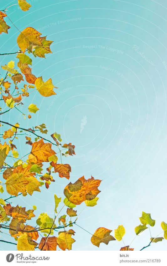 Nature Sky Blue Plant Leaf Yellow Air Background picture Weather Environment Gold Perspective Growth Change Transience Blue sky