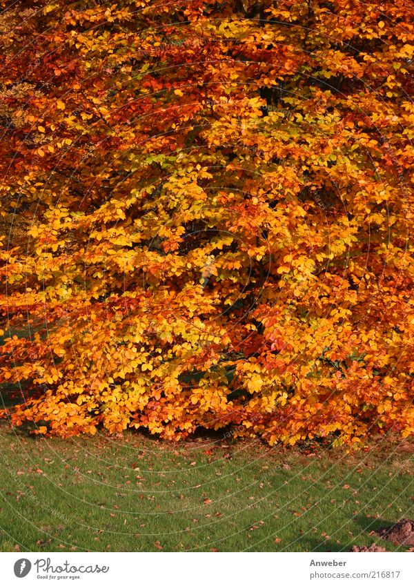 Nature Beautiful Tree Green Plant Red Calm Leaf Yellow Meadow Autumn Moody Brown Orange Background picture Weather