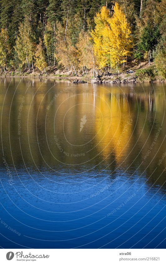 Nature Water Tree Plant Lake Landscape Environment Authentic Idyll Autumn leaves Autumnal Surface of water Edge of the forest Autumnal colours Water reflection