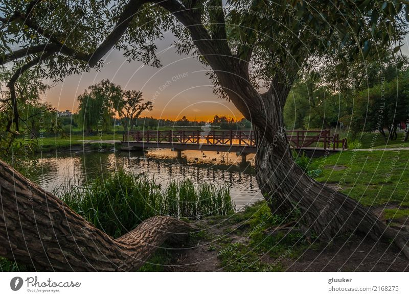 summer evening landscape. city park Beautiful Leisure and hobbies Summer Nature Landscape Sky Tree Grass Park Coast Pond Lake River Bridge Pedestrian