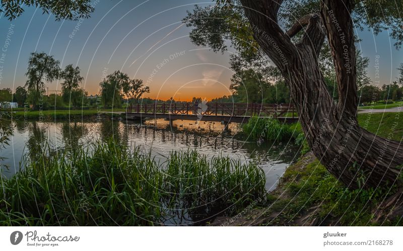 summer panoramic view in the evening city park Beautiful Leisure and hobbies Summer Nature Landscape Plant Water Sky Sunrise Sunset Weather Beautiful weather